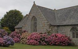 Iglesia vieja con la ventana y la planta de la hortensia Fotografía de archivo