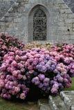 Iglesia vieja con la ventana y la planta de la hortensia Imagen de archivo libre de regalías