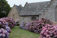Iglesia vieja con la ventana y la planta de la hortensia Imágenes de archivo libres de regalías