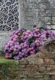 Iglesia vieja con la ventana y la planta de la hortensia Imagen de archivo