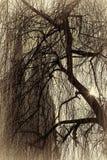 Iglesia y árbol y sol abstractos Fotos de archivo libres de regalías