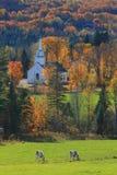Iglesia y vacas de Vermont Fotografía de archivo
