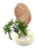 Igname de germination sur un piédestal Image stock