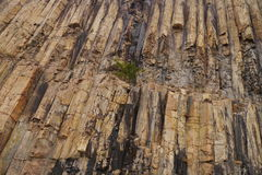 Igneous rock pattern. Plant between the igneous rock Royalty Free Stock Photography