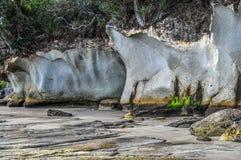 Ignimbrite klippor i Nya Zeeland Arkivfoto
