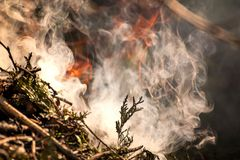 Ignite the fire. Macro shot of bonfire, white smoke, hot, glowing coal and fire. Stock Photography