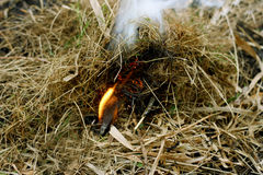 Ignition of dry grass. Autumn dry grass close up. A large defocused lit a match, igniting the grass Royalty Free Stock Photography