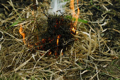 Ignition of dry grass. Autumn dry grass close up. A small incipient fire. lit from the dry grass Royalty Free Stock Photos
