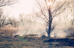 Ignition of dry grass. Fire danger. Ignition of dry grass. Fire danger Royalty Free Stock Image