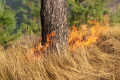 Fire in the forest in the hot summer Stock Photo