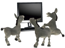 Ignorant donkeys Stock Photography