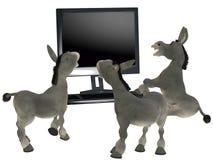 Ignorant donkeys Stock Photography