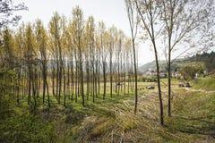 Igreja alba e vinhedos e montes de Piemonte na mola, Itália Fotos de Stock