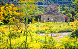 Igreja através das flores amarelas, Chipre de Lefkara Fotos de Stock Royalty Free