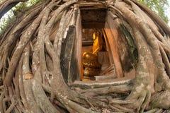A igreja cobriu acima as raizes, igreja tailandesa. imagens de stock royalty free