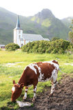 Igreja de Varlberg e de vacas Fotos de Stock Royalty Free