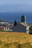 Igreja entre as videiras Imagens de Stock Royalty Free