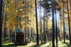 Igreja na floresta imagem de stock
