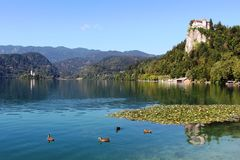 A igreja no lago da ilha sangrou, castelo sangrado, Eslovênia Imagens de Stock