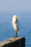 Igret bird against blue Arabian sea Royalty Free Stock Images