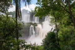 Iguacu spada przez drzew Obrazy Royalty Free