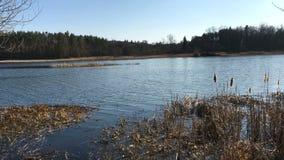 Igualación de escena tranquila, de la onda inminente hermosa, de la orilla en el lago o de la charca almacen de metraje de vídeo