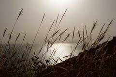Igualación de la luz con la silueta de la isla detrás de las cuchillas de la hierba fotos de archivo