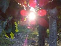Igualación de luz del sol del tiempo jpg fotos de archivo