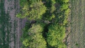 Igualación de vuelo aéreo sobre el límite del obstáculo del campo de la primavera, superior abajo de la visión, 4K almacen de metraje de vídeo