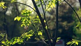 Igualando tiempo en el jard?n con las hojas del ?rbol hechas excursionismo metrajes