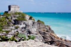 Iguana και πυραμίδα. Στοκ Φωτογραφία
