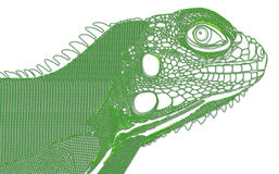 Iguana. An iguana green lines illustrated in stock illustration