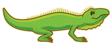 Iguana Stock Images