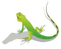 Iguana. ilustração do vetor