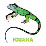 Iguana. Vector illustration of green iguana Stock Photos