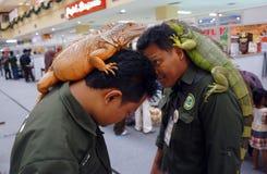 Iguana Immagini Stock Libere da Diritti