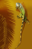 Iguana. A large iguana with orange and green colors and stripes on the tail. Shadow of a palm frond is to the left of the image. Goldish background stock images