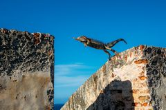 Iguana Fotos de Stock