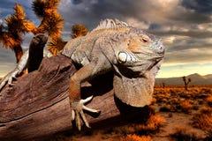 Iguana al tramonto Fotografia Stock Libera da Diritti