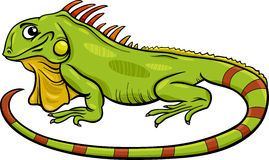 Iguana animal cartoon illustration Stock Images