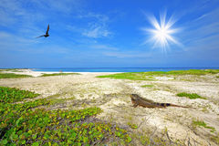 Iguana on the beach. Iguana on Boca Grande beach on Aruba Stock Photos