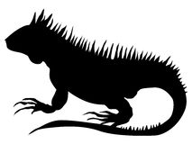 Iguana vector illustration