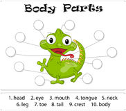 Iguana body parts. Animal anatomy in English. Write the correct numbers of body parts Royalty Free Stock Photography