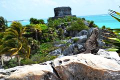 Iguana came to bask in the background of Windy God Temple which guards the entrance to the bay sea of Tulum. Stock Photography