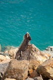 Iguana in the Caribbean Stock Images