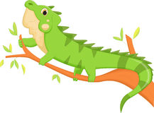 Iguana cartoon Stock Image
