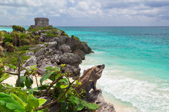 Iguana on the cliff of Tulum Stock Photo