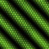Iguana da pele do réptil listrada Imagens de Stock