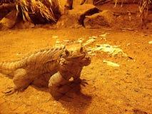 Iguana del cubano de la sonrisa Imagen de archivo libre de regalías