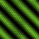 Iguana della pelle del rettile barrata Immagini Stock